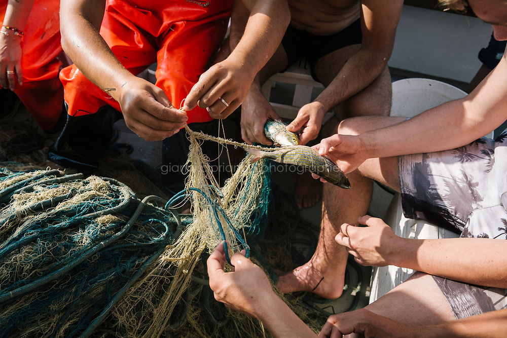 """TALAMONE, ITALY - 27 AUGUST 2019: Visitors untangle fish from the net on the """"Sirena"""", Paolo's fishing boat in Talamone, Italy, on August 27th 2019.<br /> <br /> In 2006, fisherman Paolo Fanciulli used government funds and the donations from his loyal excursion clients to fund a project in which they protected the local waters from trawling by dropping hundreds of concrete blocks around the seabed. But his true dream was to lay down works of art down on the sea floor off the coast of Tuscany. His underwater art dreams came true when the owner of a Carrara quarry, inspired by Mr. Fanciulli's vision, donated a hundred marble blocks to the project.<br /> Mr. Fanciulli invited sculptors to work the marble and set up kickstarter accounts, boat tours and dinners to fund the project. The acclaimed British artist Emily Young carved a ten-ton """"Weeping Guardian"""" face, which was lowered with other sculptures into the water in 2015.<br /> Since then, coral and plant life have covered the sculptures and helped bring back the fish. And Paolo the Fisherman is catching as many of them as he can."""