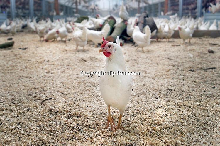 Nederland, Beuningen, 10-1-2020 Een nieuwe moderne,duurzame en diervriendelijke kippenstal. De Kipster is een kippenbedrijf wat milieuvriendelijk en diervriendelijk eieren produceert. Kippen hebben ruimte en kunnen naar buiten. De stal is klimaatneutraal. Via zonnepanelen op het dak wordt eigen stroom opgewekt. Foto: ANP/ Hollandse Hoogte/ Flip Franssen