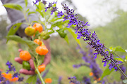 Editorial photography from Moss Mountain Farm for P. Allen Smith in Little Rock, Arkansas. Includes photos of flowers, animals, portraits of P. Allen Smith, interiors and exteriors.