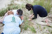 Volunteers taking inventory of Loggerhead Sea turtle nest