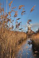 Cley Mill and Reedbed  in winter, Norfolk