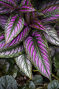 Purple Macro Photography