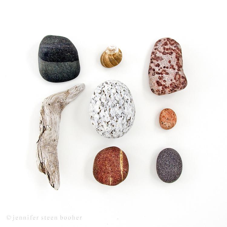 Granite, schist, basalt, and jasper mix in these beach stones from Swan's Island, Maine. Common Periwinkle  (Littorina littorea).