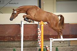 Be Helena<br /> KWPN Paardendagen 2009<br /> © Hippo Foto - Leanjo de Koster