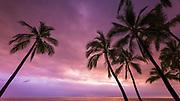 Sunset through palm trees at Pu'uhonua o Honaunau NHP(City of Refuge), Kona Coast, The Big Island, Hawaii USA