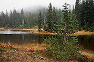 Junction Lake shoreline in autumn, Indian Heaven Wilderness, Gifford Pinchot National Forest, Cascade Mountain Range, Washington state, USA