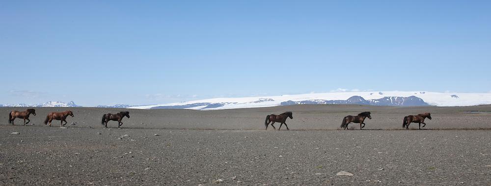 Horses in the highlands of Iceland on Sprengisandur and the glacier Hofsjokull in back - Hestar á Sprengisandi, Hofsjökull í baksýn