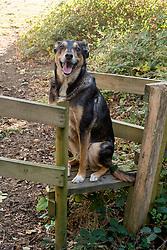 Tired dog takes a sit down<br /> <br />   02 October 2016<br />   Copyright Paul David Drabble<br />   www.pauldaviddrabble.photoshelter.com