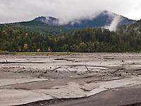 glacial silt and broken trees litter the exposed lake bottom of Alder Lake, Elbe, WA, USA