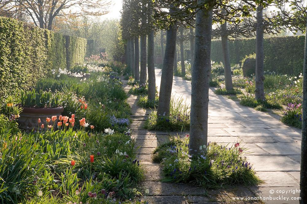 Morning light in the Lime Walk at Sissinghurst Castle Garden in spring