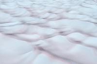 Chlamydomonas nivalis algae on snow, Mount Baker Wilderness Washington