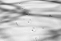 Cat tracks in my front yard. Late winter snow in New Jersey. Image taken with a Nikon D2xs camera and 80-400 mm VR lens (ISO 100, 80 mm, f/11, 1/500 sec).