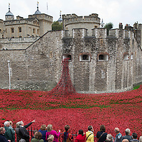 London GV's & Poppies at Tower of London