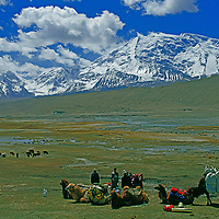 Xinjiang, China. Khyrgiz nomads with their Bactrian camels and sheep herd in the Pamir Mountains.