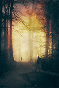 moody path through a foggy forest - photograph edited with texture overlays