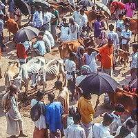 A diverse crowd of people and animals gathers at the weekly Mirpur animal market near Dhaka, Bangladesh.