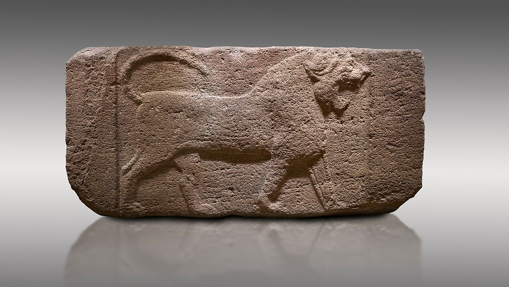 Pictures & images of Phygian relief sculpted orthostat stone panel. Andesite, Etimesgut, Ankara. Phrygian. 1200-700 BC. Anatolian Civilisations Museum, Ankara, Turkey.<br /> <br /> Figure of a roaring lion. The cross mark on the chest draws attention. The muscles in his legs are schematic. There are frame edges in front and behind the lion. <br /> <br /> Against a gray background. .<br /> <br /> If you prefer you can also buy from our ALAMY PHOTO LIBRARY  Collection visit : https://www.alamy.com/portfolio/paul-williams-funkystock/phrygian-antiquities.html  - Type into the LOWER SEARCH WITHIN GALLERY box to refine search by adding background colour, place, museum etc<br /> <br /> Visit our CLASSICAL WORLD PHOTO COLLECTIONS for more photos to download or buy as wall art prints https://funkystock.photoshelter.com/gallery-collection/Classical-Era-Historic-Sites-Archaeological-Sites-Pictures-Images/C0000g4bSGiDL9rw