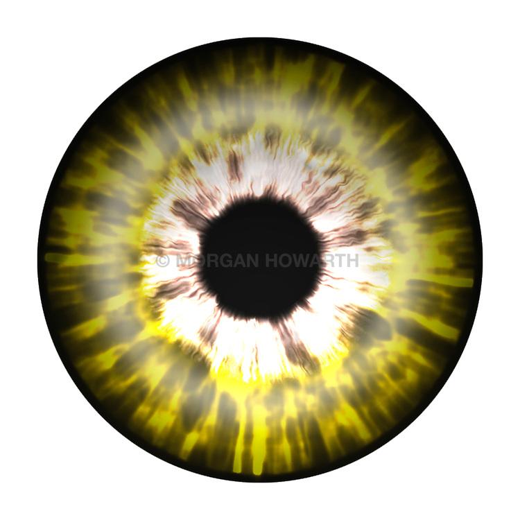 yellow and brown eye iris eye iris eye iris