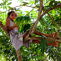 South America, Brazil, Amazon. A young girl is spotted in the tree, making sounds like a wild animal of the Amazon River.