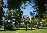 Player on the course at Weddington Golf and Tennis in Studio City, CA. Aug. 27, 2014. Photo by David Sprague