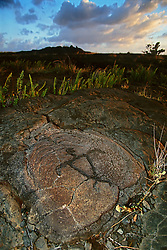 Petroglyph, representing an ideal broad-shouldered Hawaiian male, Pu`u Loa, Puu Loa, Pu`uloa or Puuloa Petroglyph Trail, Hawaii Volcanoes National Park, Kilauea, Big Island, Hawaii