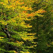 "Subtle colors of autumn during ""peak foliage"" time in Bridgton, Maine."