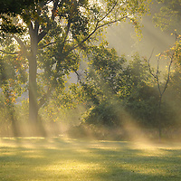 """""""Beautiful Morning Light'<br /> Wonderful golden rays of light stream through the trees on a late summer morning!!"""