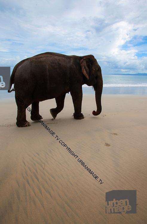Elephant on the Beach - Andaman Islands 2014