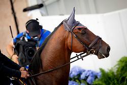 Senra Chover Manuel, ESP, Cruising<br /> World Equestrian Games - Tryon 2018<br /> © Hippo Foto - Sharon Vandeput<br /> 17/09/2018