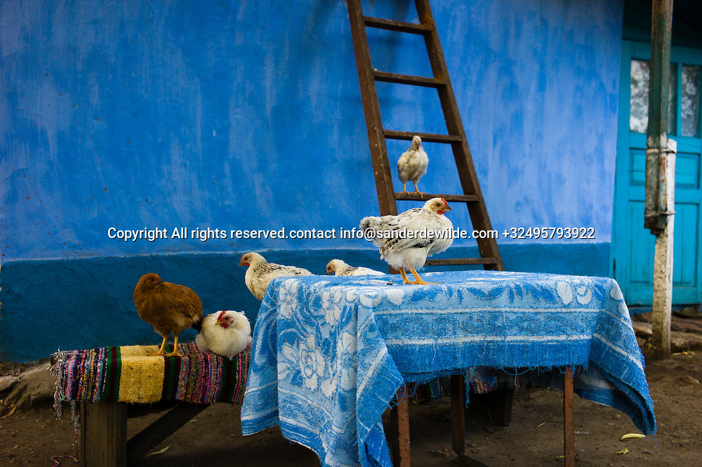 20150821  Moldova, Tipova. chicken make a nice composition on the tabe at my blue guesthouse in Tipova