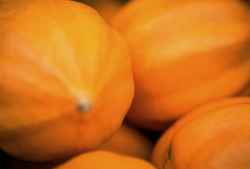 Close up selective focus photograph of a group of Golden Buttercup Squash in the sunlight