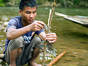 Local boatman/fisherman, Savath prepares fish for cooking over an open fire which he has just caught by electric fishing in the Nam Ou river, Phongsaly province, Lao PDR. The Nam Ou river connects small riverside villages and provides the rural population with food for fishing. But this river and others like it, that are the lifeline of rural communities and local economies are being blocked, diverted and decimated by dams. The Lao government hopes to transform the country into 'the battery of Southeast Asia' by exporting the power to Thailand and Vietnam.