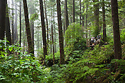 Hikers climb a ladder in a forest along the West Coast Trail, British Columbia, Canada.
