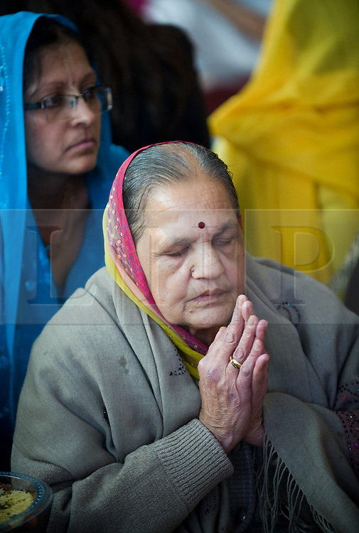 """© under license to London News pictures.  06/11/2010.An elderly woman praying during Celebrations for Diwali, the Hindu new year, at Gokul Centre for Cow Protection and Working Oxen in Aldenham near Watford, Hertfordshire today (Sat). The centre, which was originally donated by George Harrison, is unique in the western world producing """"Ahimsa Milk"""" at a cost of £3 per litre without harm to any living being. The Centre is part of Bhaktivedanta Manor, a Hindu place of worship."""