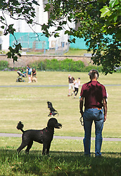 ©Licensed to London News Pictures 22/06/2020<br /> Greenwich, UK. A dog walker stopping for a rest in the shade. A warm sunny day in Greenwich park, Greenwich, London. The UK to enjoy hot heatwave weather this week with temperatures set to bring the hottest day of the year so far. Photo credit: Grant Falvey/LNP