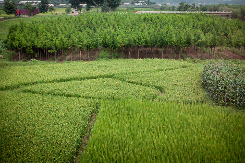Agriculture in North Korea is well-organised. Visible from the train ride between Dandong and Pyongyang, all along the route, fields of rice and soya and maize go as far as the eye can see. Fruit orchards and stands of trees spot the landscape.
