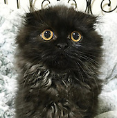 The Cat With The Biggest Eyes