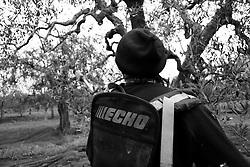 01/12/2010 Acquaviva delle Fonti, operaio al lavoro....La raccolta delle olive e la produzione dell'olio extravergine sono un rituale che si protrae da moltissimo tempo in Puglia, questo avviene solitamente nel periodo che va da novembre a dicembre, mentre il lavoro di preparazione e coltivazione si svolge lungo tutto l'arco dell'anno..La raccolta è seguita nella maggior parte dei casi, quando le olive non vengono vendute all'ingrosso, dalla molitura presso gli oleifici per la produzione di quello che da queste parti viene chiamato anche oro verde..