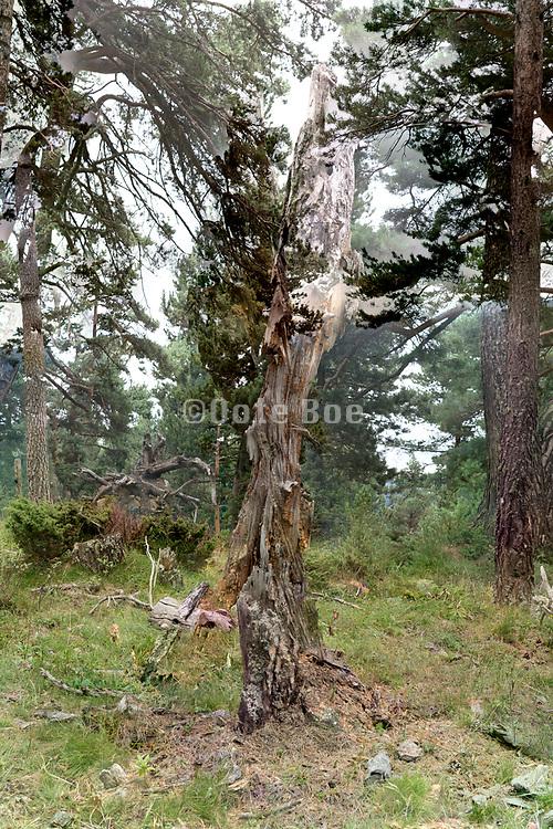 rotting tree stump