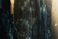 Brunnich's Guillemot (Uria lomvia) in bird cliffs, Spitsbergen, Svalbard
