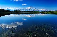Mt. Denali/ McKinley reflects on Reflection Pond under blue sky, Denali National Park & Preserve, Alaska