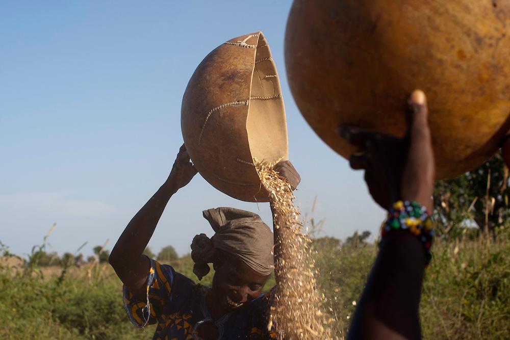 Winnowing beans. Segou, Mali