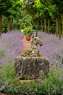 Nepeta under Robinia pseudoacacia 'Umbraculifera' and a stone statue of a unicorn in  the Unicorn Garden at Cothay Manor, Greenham, Wellington, Somerset, UK