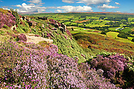 View of Danby Dale with heather flowering.  North Yorks National Park, North Yorkshire, England .<br /> <br /> Visit our ENGLAND PHOTO COLLECTIONS for more photos to download or buy as wall art prints https://funkystock.photoshelter.com/gallery-collection/Pictures-Images-of-England-Photos-of-English-Historic-Landmark-Sites/C0000SnAAiGINuEQ