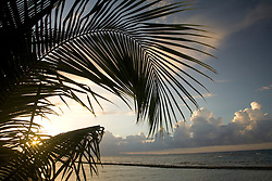 United States, Puerto Rico, Vieques.  Palm trees, beach and Caribbean Sea.