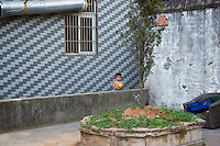 Boy standing in an outdoor courtyard.