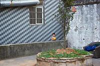 Boy standing in an outdoor courtyard.