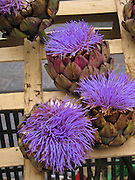 Artichokes for sale in a fruit and vegetable market in Rennes, France