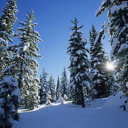 The Gallatin/Targhee National Forest in the winter. Idaho