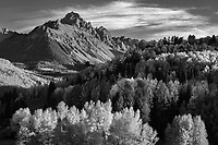 Black and white of Mt Sneffels and backlit aspen forest in Colorado, USA
